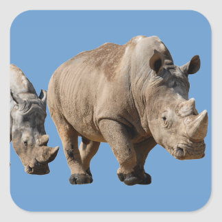 Isolated two white rhinoceros square sticker
