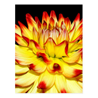 Isolated yellow and red dahlia flower postcard