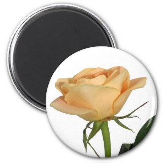 Isolated yellow rose magnets