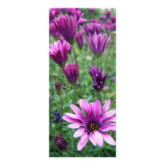 Israel Spring Flowers Full Color Rack Card