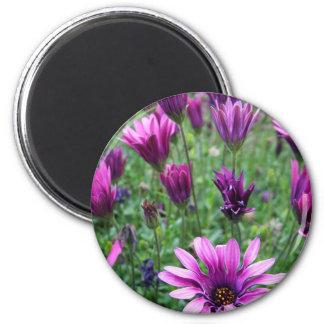 Israel Spring Flowers Magnet