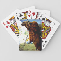 Israeli Camel Playing Cards
