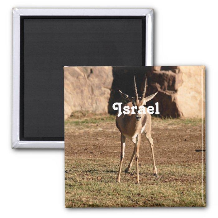 Israeli Gazelle 2 Inch Square Magnet