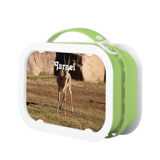 Israeli Gazelle Lunch Box