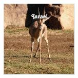 Israeli Gazelle Personalized Announcements