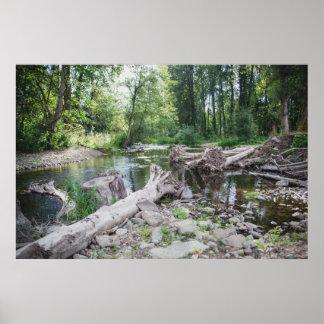 Issaquah Creek Photograph Poster