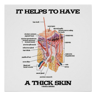 It Helps To Have A Thick Skin (Anatomy Humor) Poster