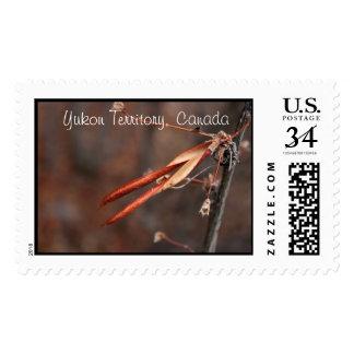 It Hurts to be Beautiful; Yukon Territory Souvenir Stamp
