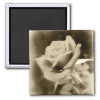It is Just a Rose 2 Inch Square Magnet
