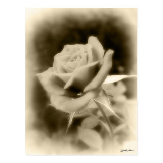 It is Just a Rose Postcard