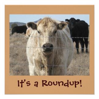 It s a Roundup Cows - Cattle Drive Celebration Custom Announcements