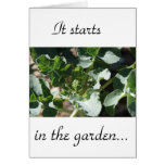 It starts in the garden greeting cards