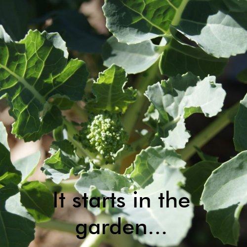 It starts in the garden sticker