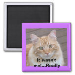 It wasn't me!...Really Refrigerator Magnet
