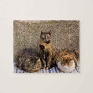 Italia, Cinque Terre, Vernazza. Tres gatos por otr Rompecabeza Con Fotos