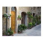 Italia, Pienza. Macetas y plantas potted Tarjeta Postal