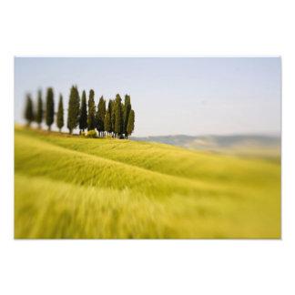 Italia Toscana, árboles de Cypress del foco select Fotografías