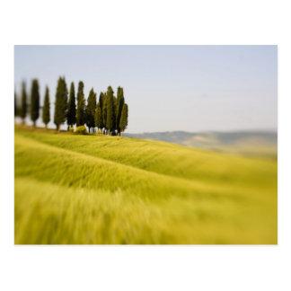 Italia Toscana, árboles de Cypress del foco Tarjeta Postal