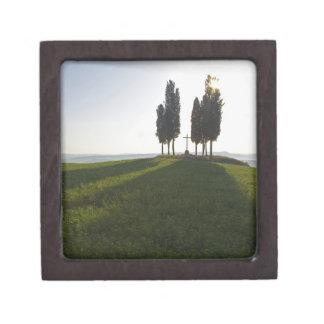 Italia, Toscana, árboles de Cypress en Toscana con Caja De Recuerdo De Calidad