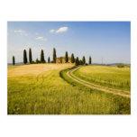 Italia, Toscana, chalet toscano que acerca a la co Tarjeta Postal