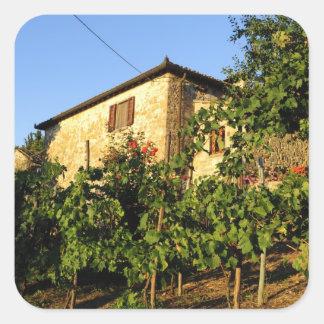 Italia, Toscana, Huelga. Escenas del vino del Calcomanía Cuadrada