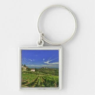 Italia, Toscana, Huelga. Los viñedos de Castello Llavero Cuadrado Plateado