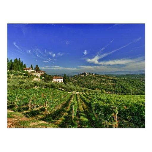 Italia, Toscana, Huelga. Los viñedos de Castello Postal