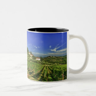 Italia, Toscana, Huelga. Los viñedos de Castello Taza De Dos Tonos
