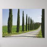 Italia, Toscana. Línea de árboles de Cypress calza Poster