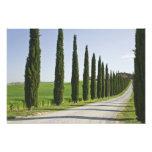 Italia, Toscana. Línea de árboles de Cypress calza Fotografías