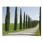 Italia, Toscana. Línea de árboles de Cypress calza Postal