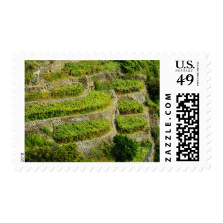 Italia, Toscana. Los viñedos colgantes de Cinque Envio