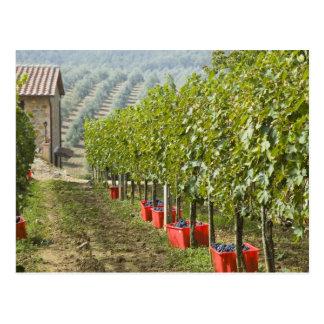 Italia, Toscana, Montalcino. Compartimientos de Tarjetas Postales
