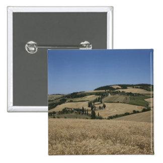 Italia. Toscana. Montichiello Pin Cuadrado