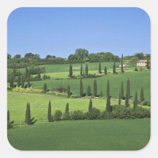 Italia Toscana Multepulciano Árboles de Cypress Calcomanía Cuadradas Personalizadas