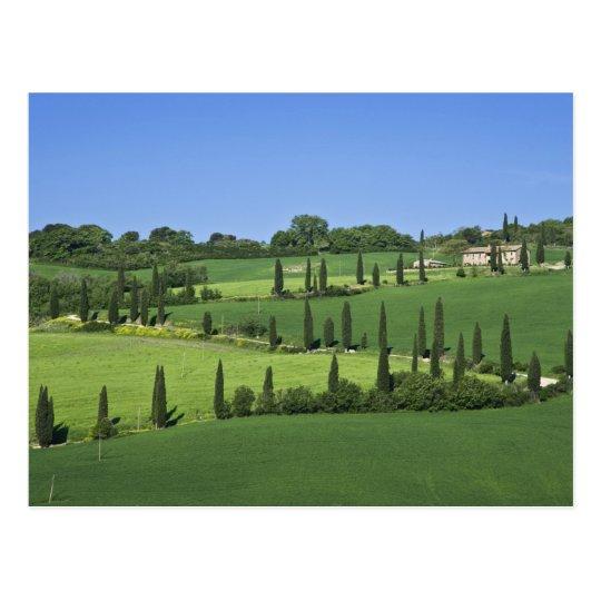 Italia, Toscana, Multepulciano. Árboles de Cypress Postal