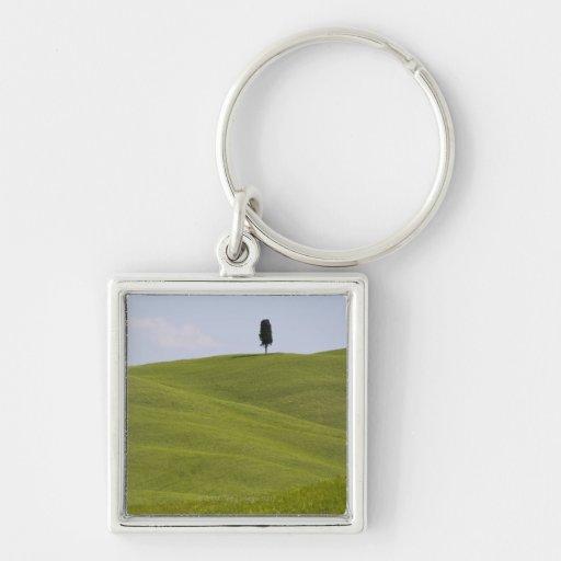 Italia, Toscana, Val D'Orcia, árbol solitario en l Llaveros