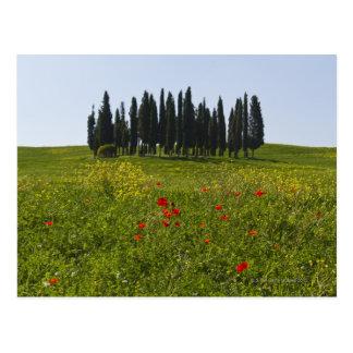 Italia, Toscana, Val D'Orcia, paisaje Postal