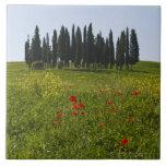 Italia, Toscana, Val D'Orcia, paisaje Tejas