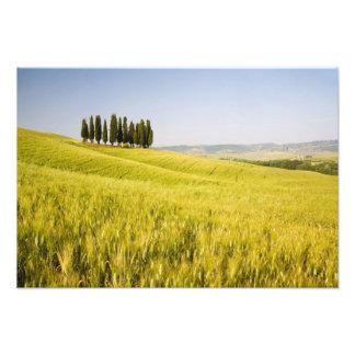 Italia, Tuscnay, el agrupar de Cypress toscano 2 Fotografías