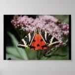 Italian Butterfly Posters