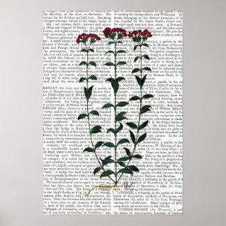 Italian Carnation Poster