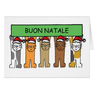 Italian Christmas with cats in Santa hats. Card