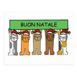 Italian Christmas with cats in Santa hats. Post Card