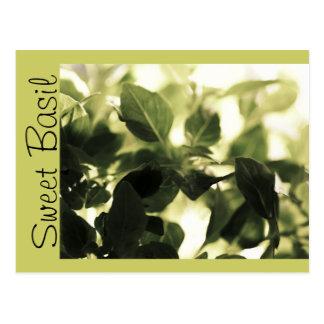 Italian Cooks! Sweet Basil, Recipe Cards, Labels Postcard