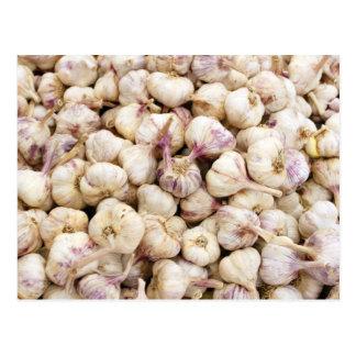 Italian Garlic Bulbs Postcard