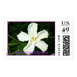 Italian Gourd blossom  Stamp