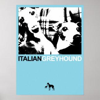 Italian Greyhound Blue II Posters