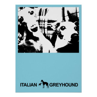 Italian Greyhound Blue Posters