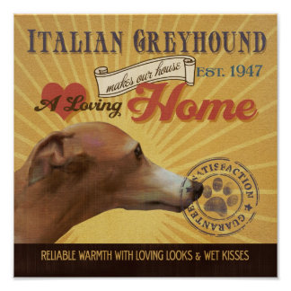 Italian GreyHound Dog Art Poster